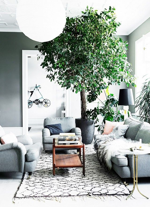 Greenery is achiccomplement toshades of cool grey. This giant tree holds its own among the luxe textures of this living room, making a bold, bushy statement.