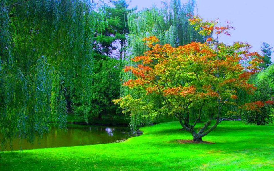 Beautiful Wallpapers Of Nature For Desktop Free Download Wsc14nd In 2020 Nature Wallpaper Beautiful Wallpapers Wallpaper
