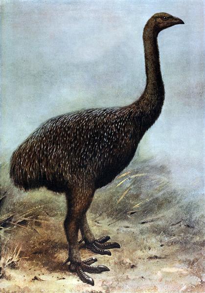 FileMegalapteryx.png Wikipedia, the free encyclopedia