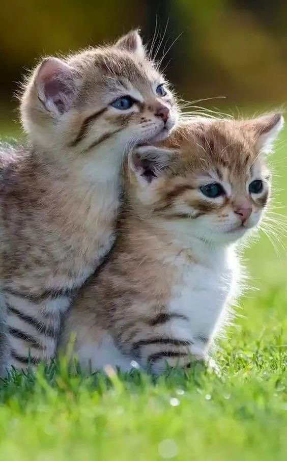 Kitties Kittens Cutest Cute Cats And Kittens Cute Baby Animals
