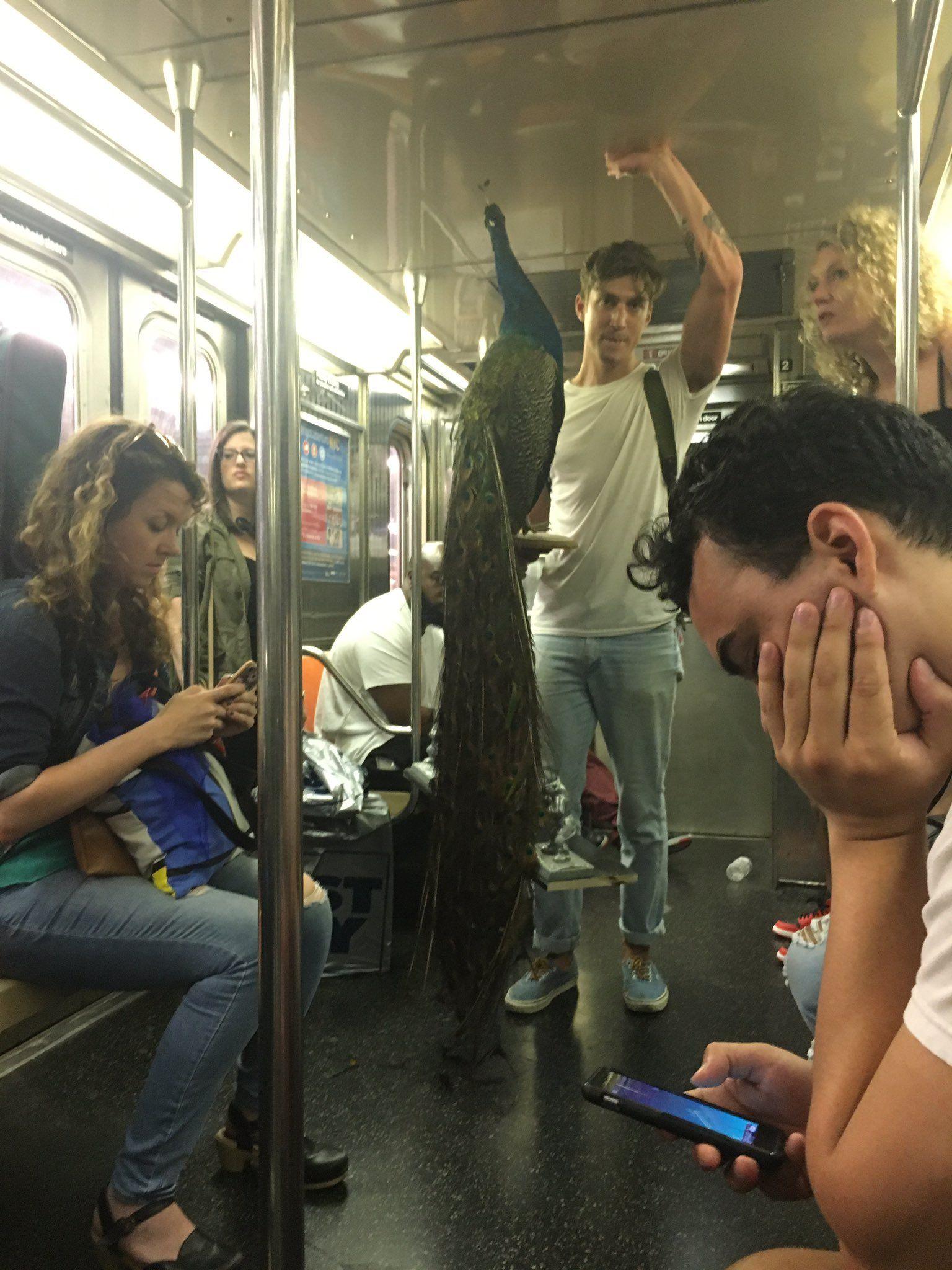 Matthew Chayes On Twitter Nyc Subway New York Subway Funny Photos