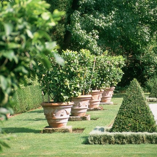 potted lemon trees   great idea for growing citrus trees