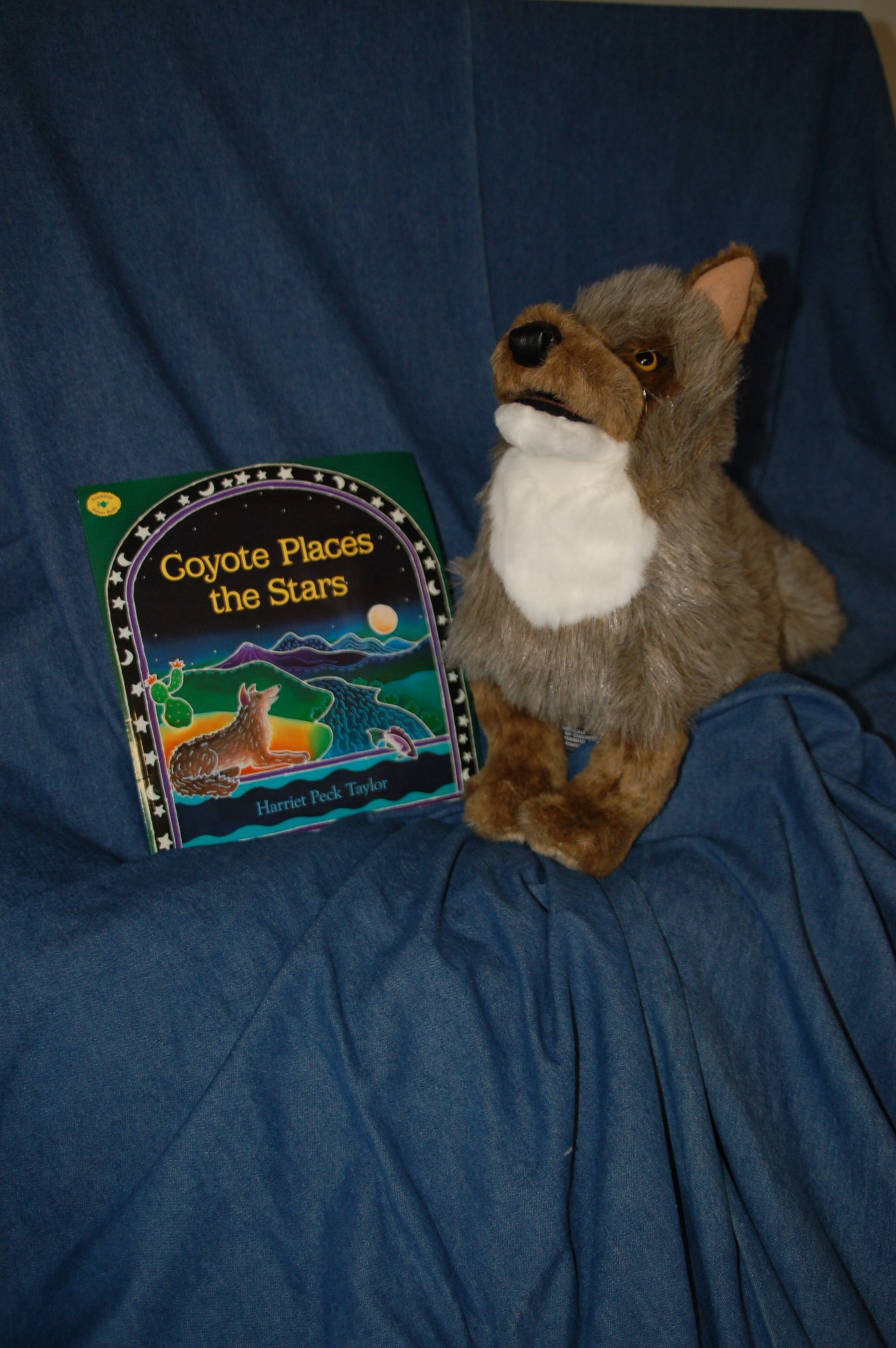 Coyote And Coyote Places The Stars