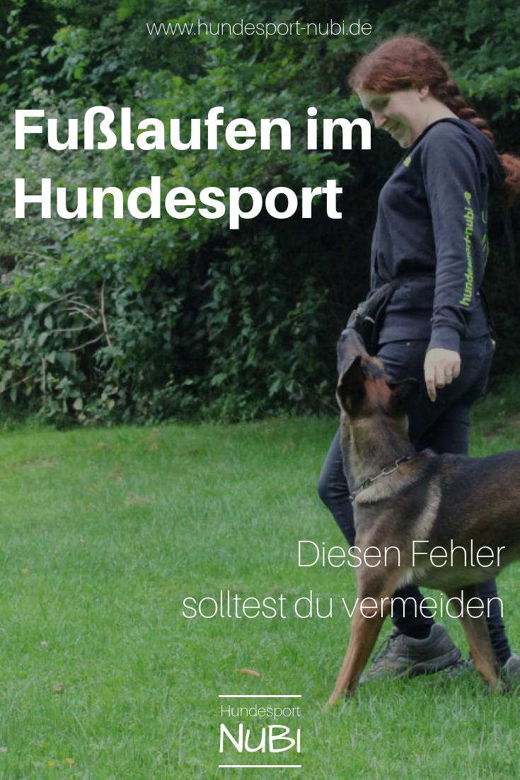 Vom Welpen Zum Begleithund Teil Acht Hundesport Hundetraining