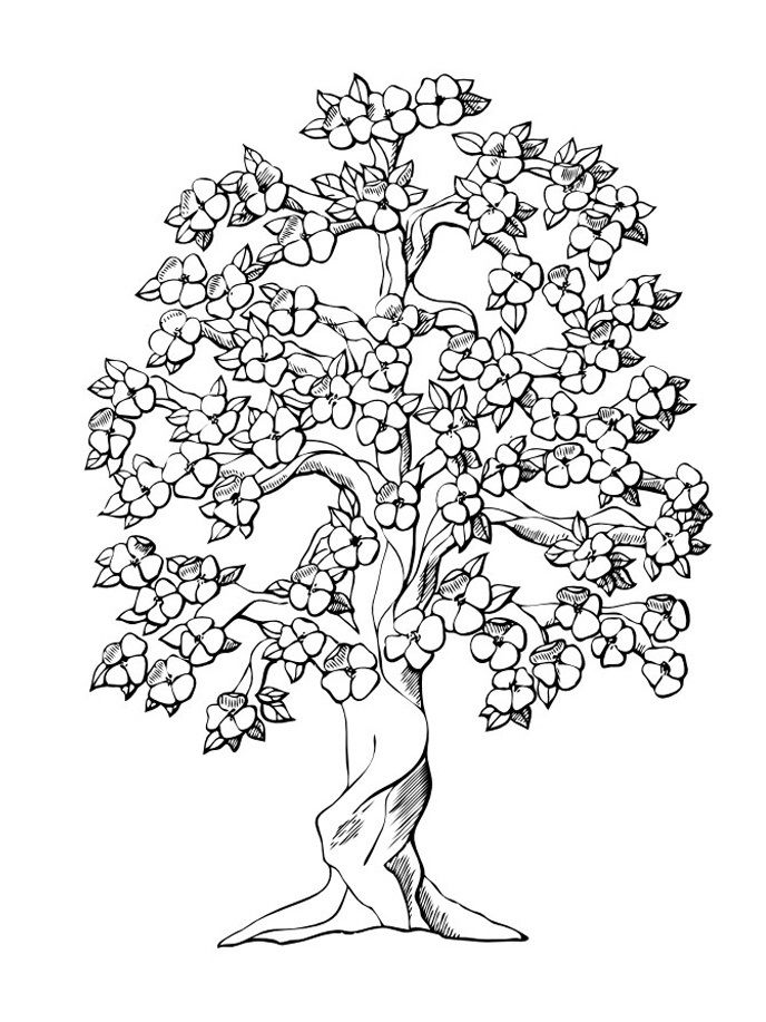 Free Printable Tree Coloring Pages For Kids Tree Coloring Page Flower Coloring Pages Coloring Pages