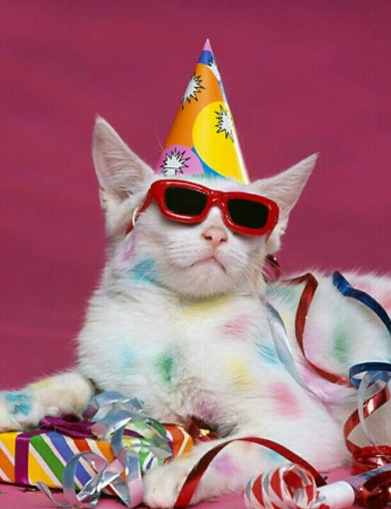 1 of Party cats (I'm so stylish!) | Kittens cutest, Cat birthday, Animals