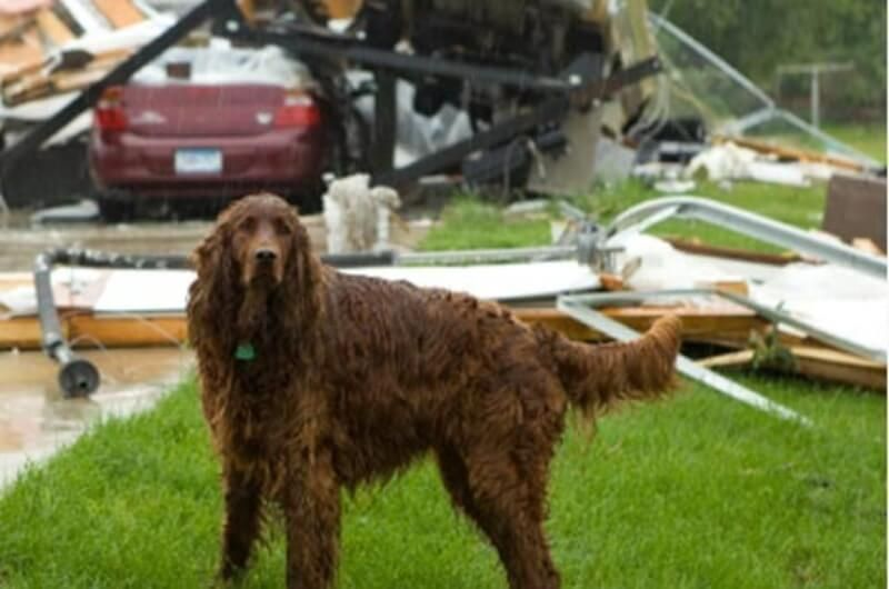 How to prepare for disaster with our fur babies pet