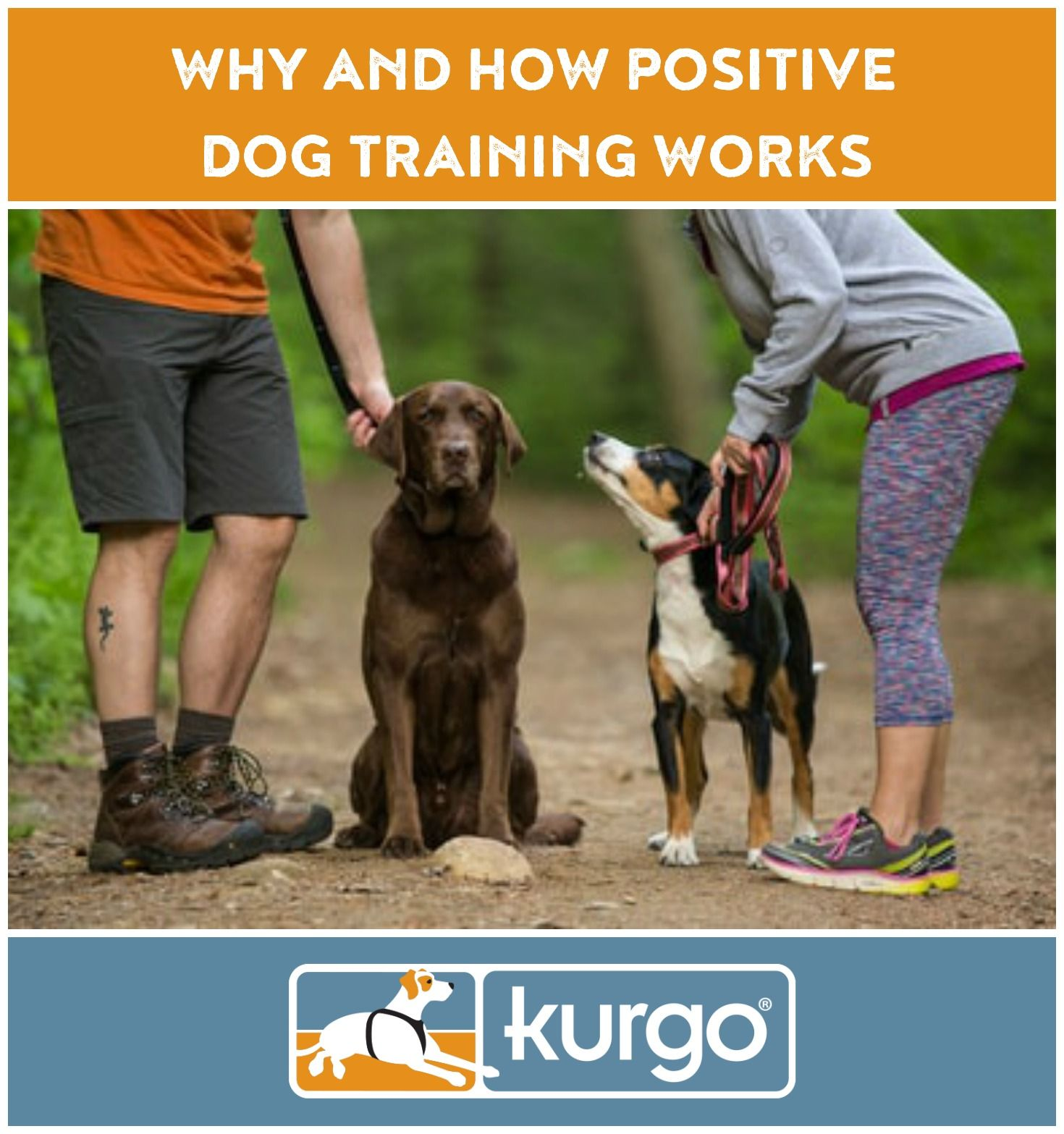 Why And How Positive Dog Training Works Positive Dog Training