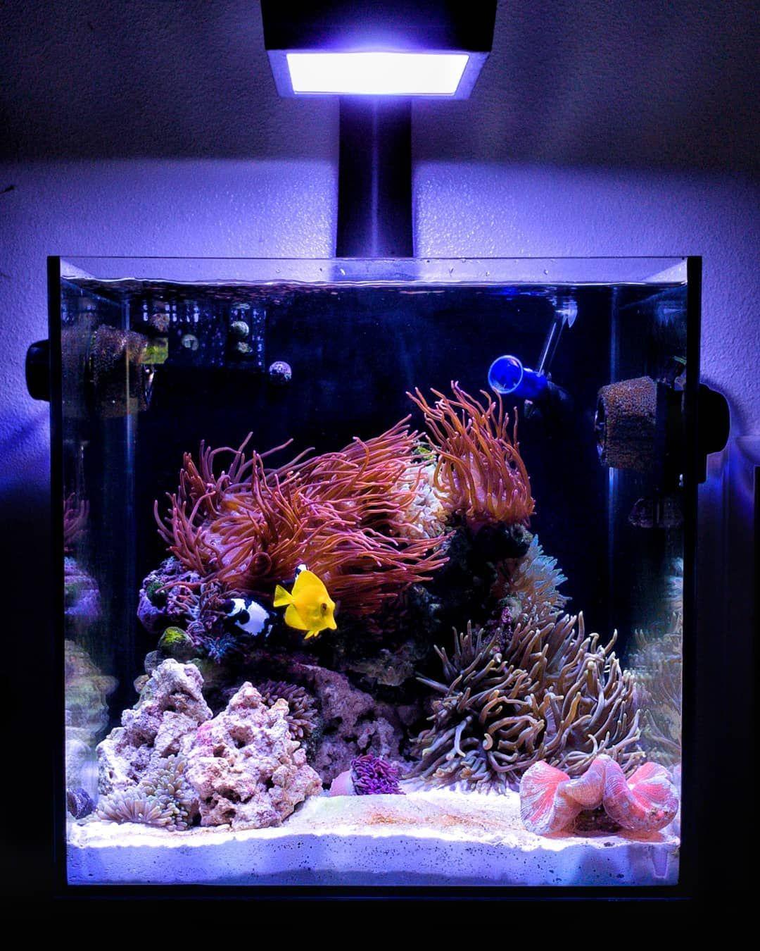 Pin On 25 Salt Water Reef Fish Aquarium