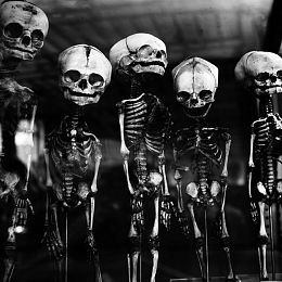 Photo of Skeletons by Laurent Orseau, Photography, Digital