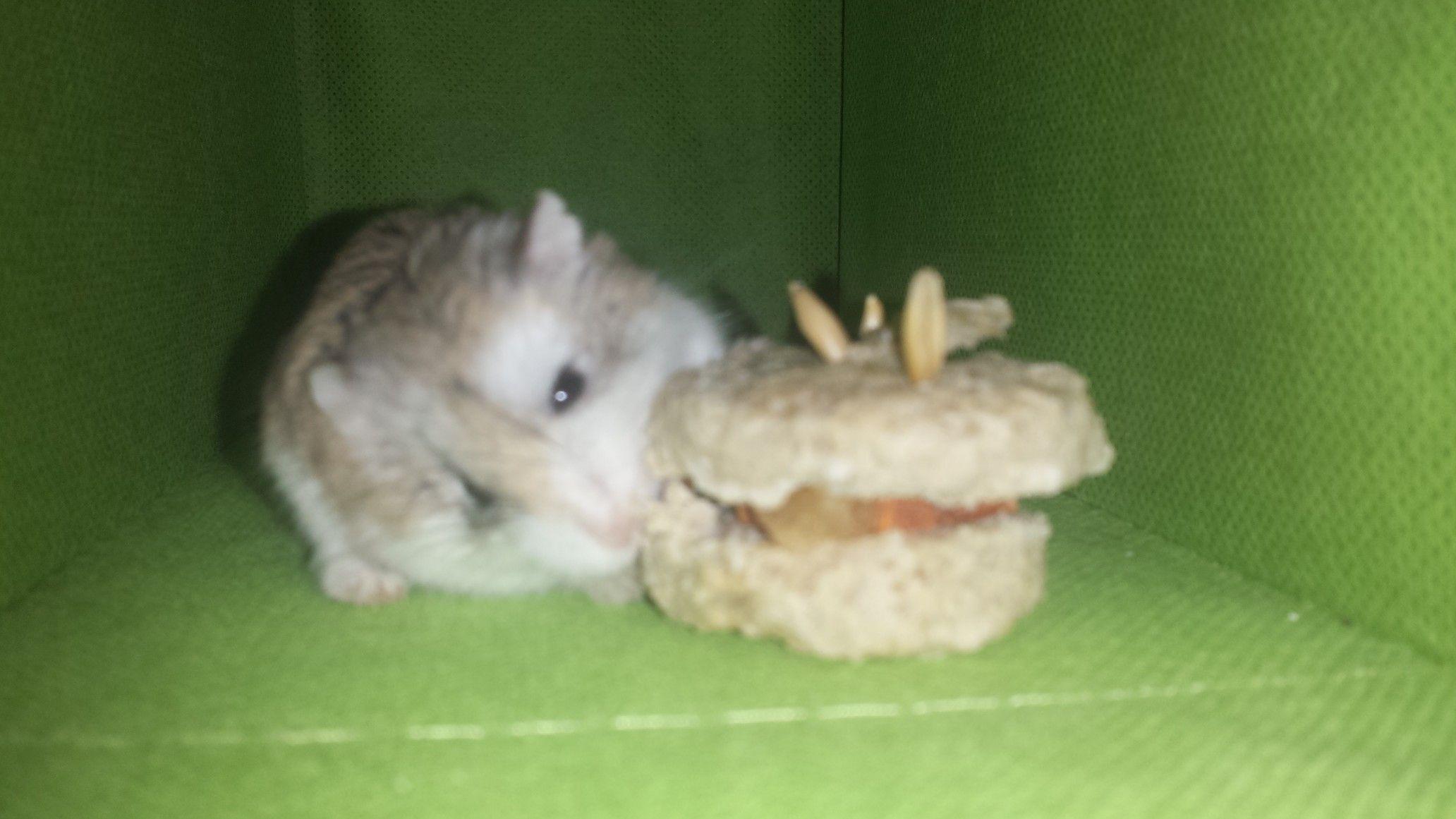 Hamster Birthday Cake Hamsters Pinterest
