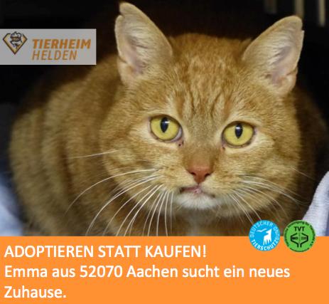 Emma ist von einem anderen Tierheim ins Tierheim Aachen