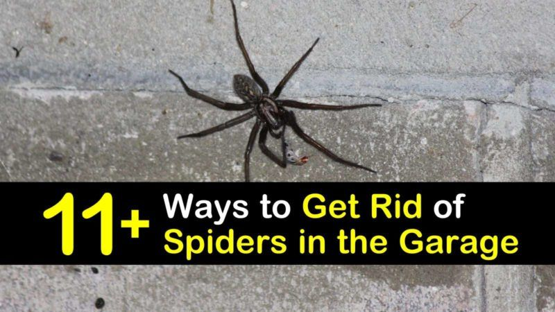11 Clever Ways To Get Rid Of Spiders In The Garage Get Rid Of Spiders Spider Spider Infestation