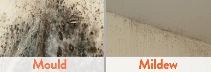 Get Rid Of Mold Mildew On The Walls With Vinegar And Baking Soda Mold In Bathroom Get Rid Of Mold Mold And Mildew
