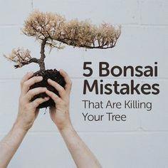 5 Bonsai Mistakes That Are Killing Your Tree - Basic Bonsai #bonsaiplants