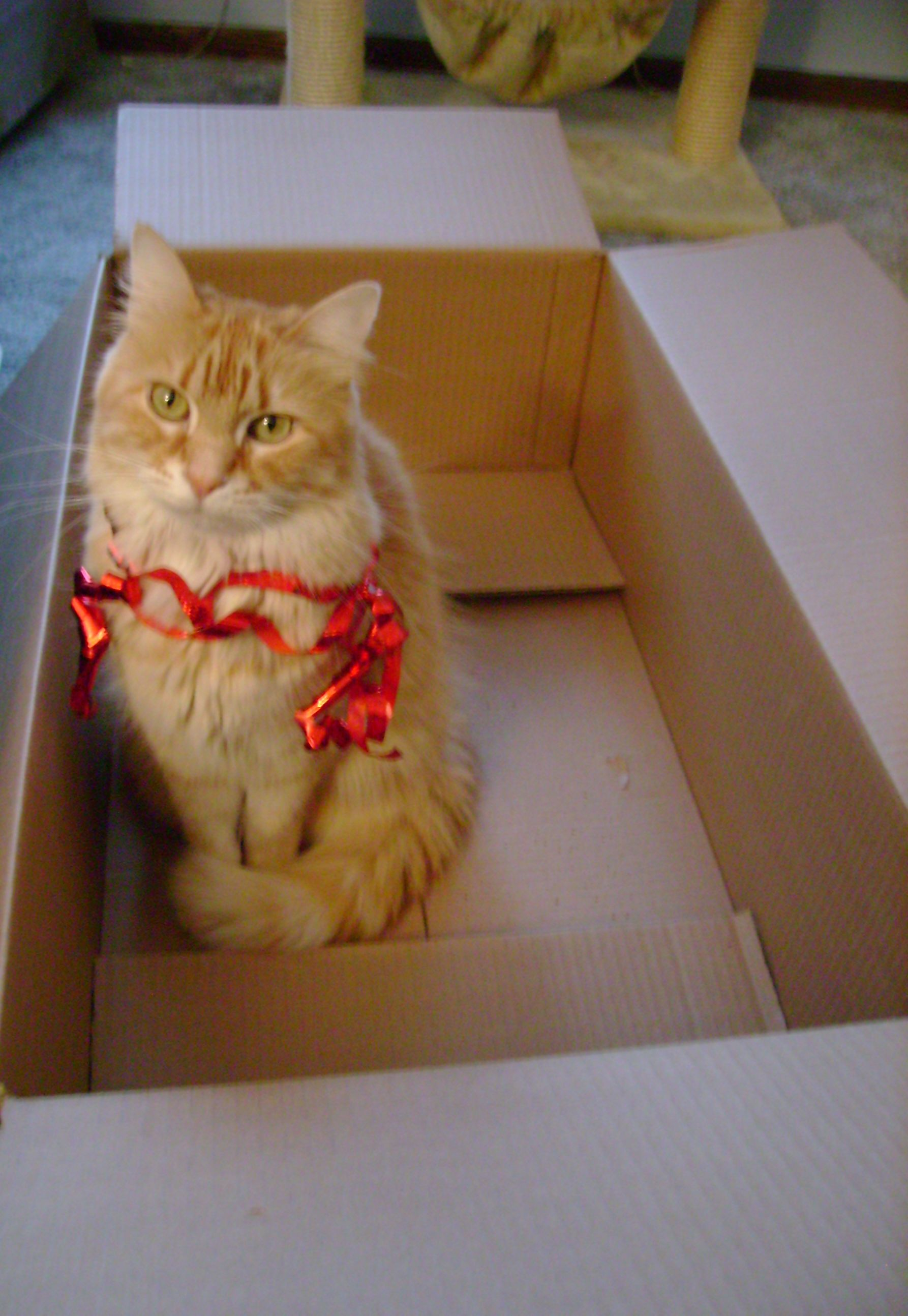 How Many Cats Can You Put In An Empty Box : empty, Empty, Cuddle,, Cats,