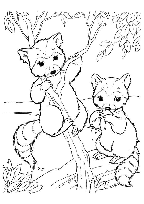 10 Funny Raccoon Coloring Pages Your Toddler Will Love To Color Deer Coloring Pages Cartoon Coloring Pages Zoo Coloring Pages