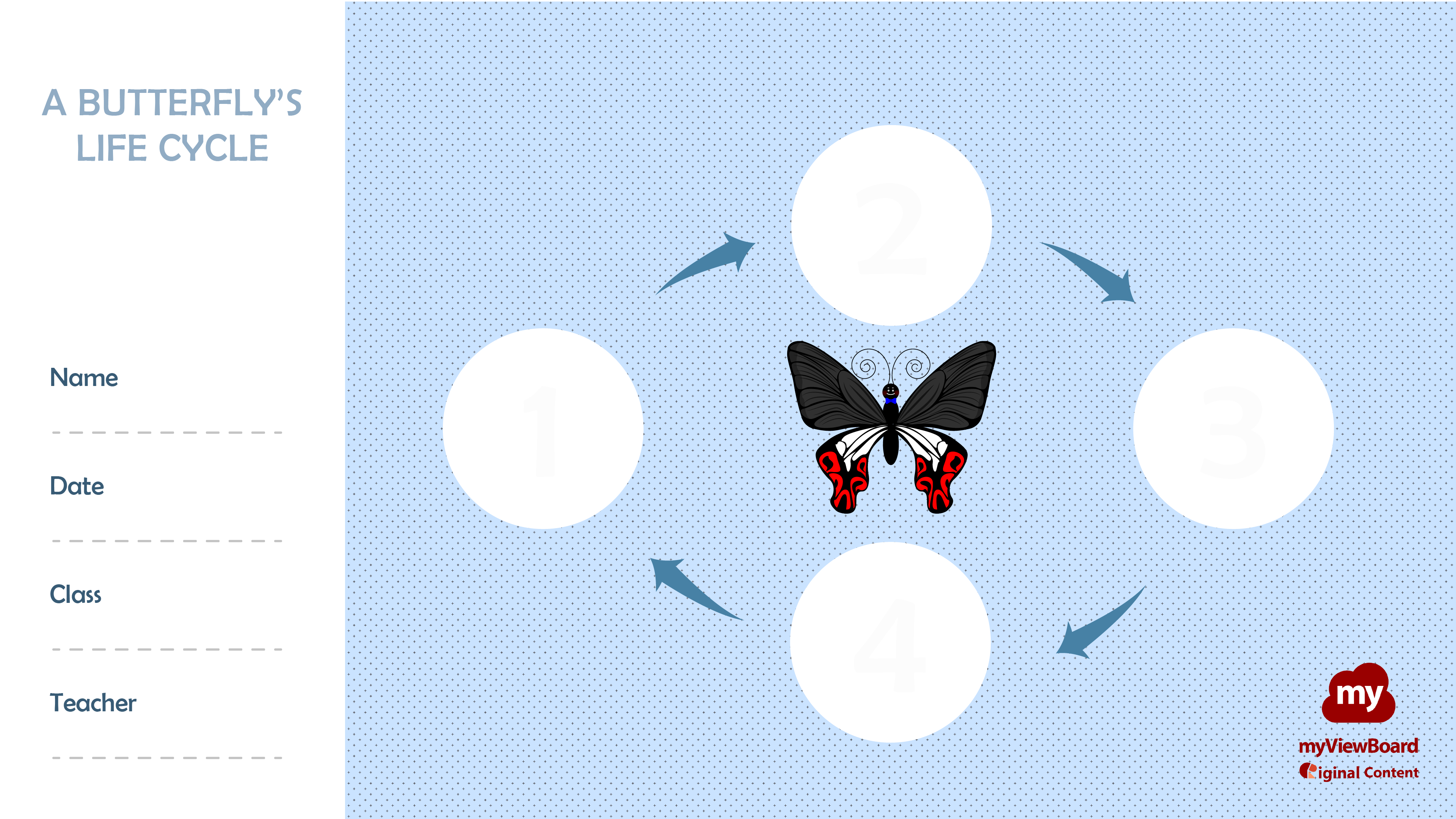 Butterfly Life Cycle Worksheet In