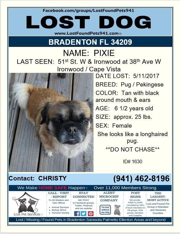 Have You Seen Pixie Lostdog Pug Pekingese Mix Bradenton Fl