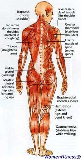 Women Strength Training Exercise: Muscle Map   Fitness   Pinterest ...