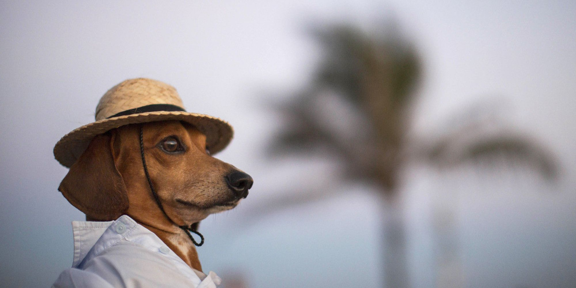 Tiny Dog In A Hat Is The Best Thing That Happened This Week Tiny Dogs Funny Animals Funny Animal Pictures