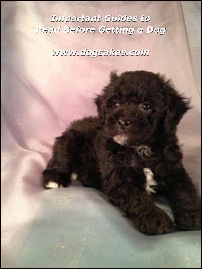 Info's : Dog Accessories - Dog Sakes