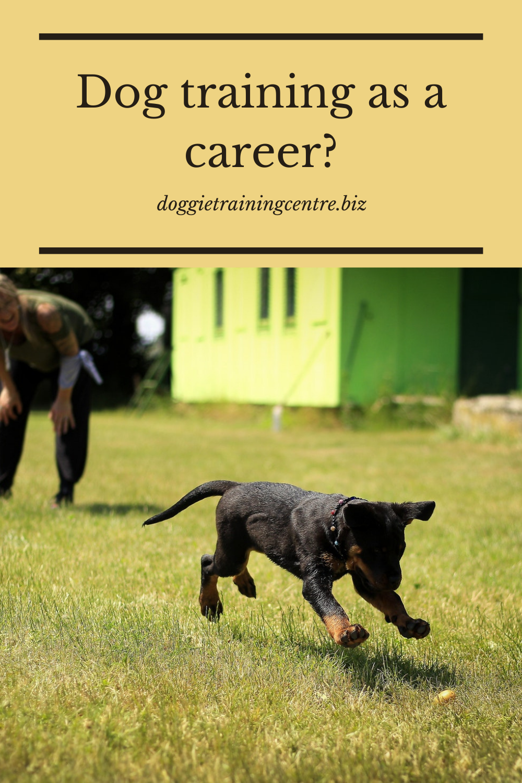 Dog Training As A Career Dog Training Online Dog Training Become A Dog Trainer