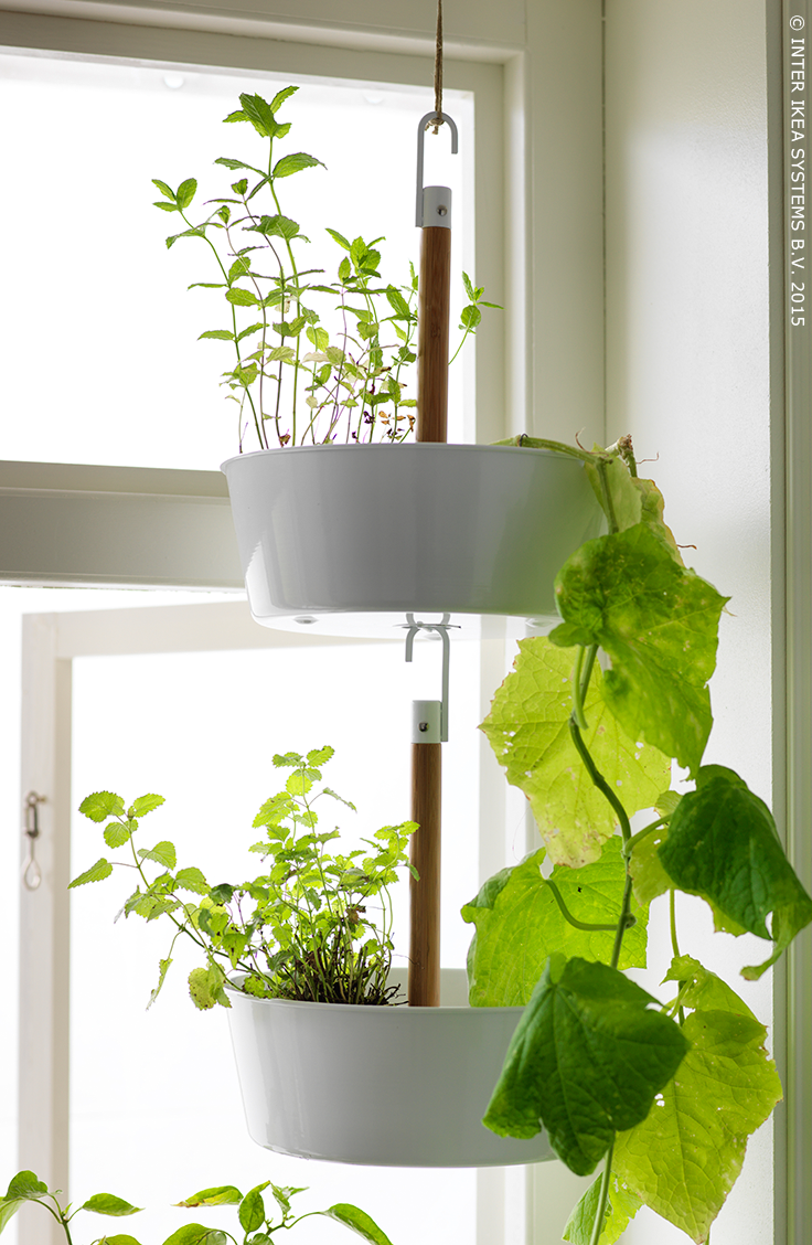 un jardin suspendu jardini re suspendue bittergurka. Black Bedroom Furniture Sets. Home Design Ideas