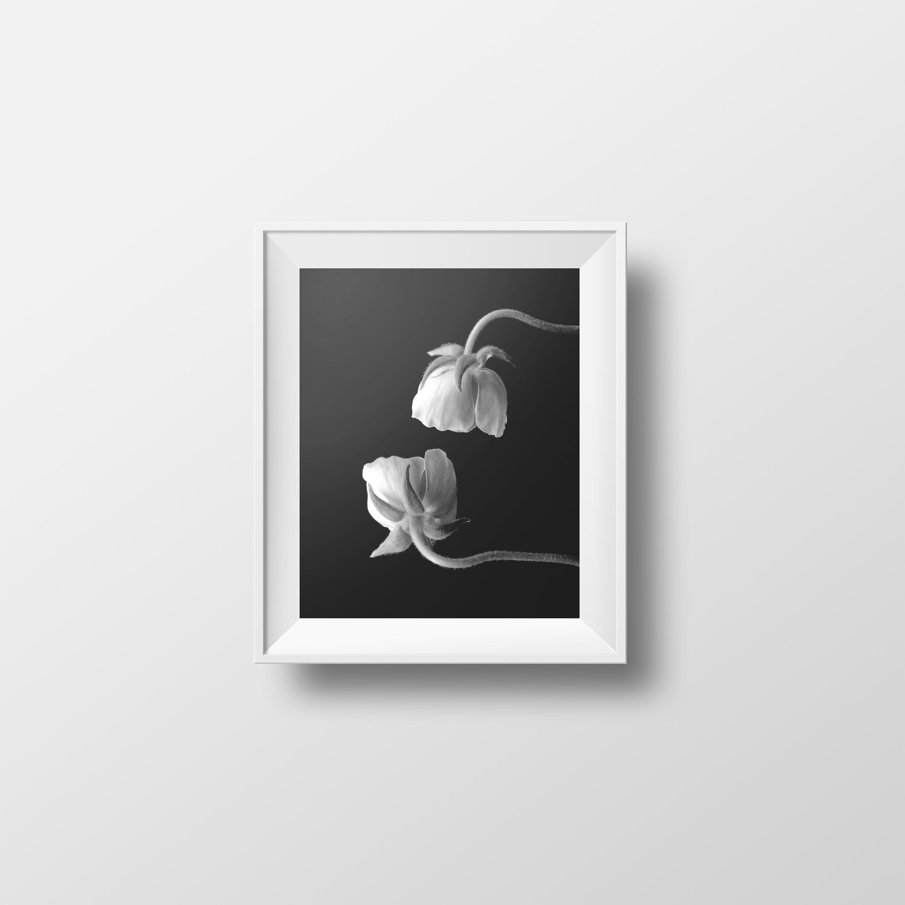 Flower print ranunculus print black white photography dark floral minimalist decor 5x7 8x10 11x14 16x20 18x24 24x30 poster floral photo by olaholahola