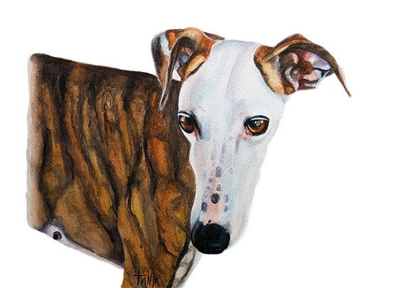 Dreaming of my future. Greyhound  Art print
