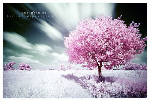 Time Machine By Werol Tree Photography Beautiful Tree Pink Trees