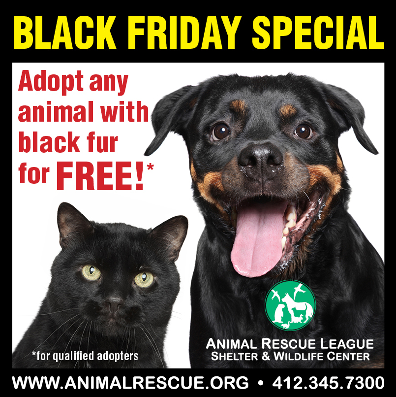 1 Day Only Friday Is Black Friday At Animal Rescue League 6620 Hamilton Ave Pittsburh Pa Animal Rescue League Rottweiler Puppies Dog Adoption