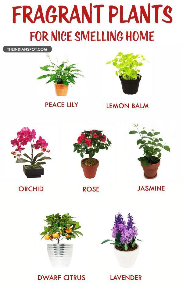 FRAGRANT HOUSEPLANTS FOR A NICE SMELLING HOME – Panissue Share
