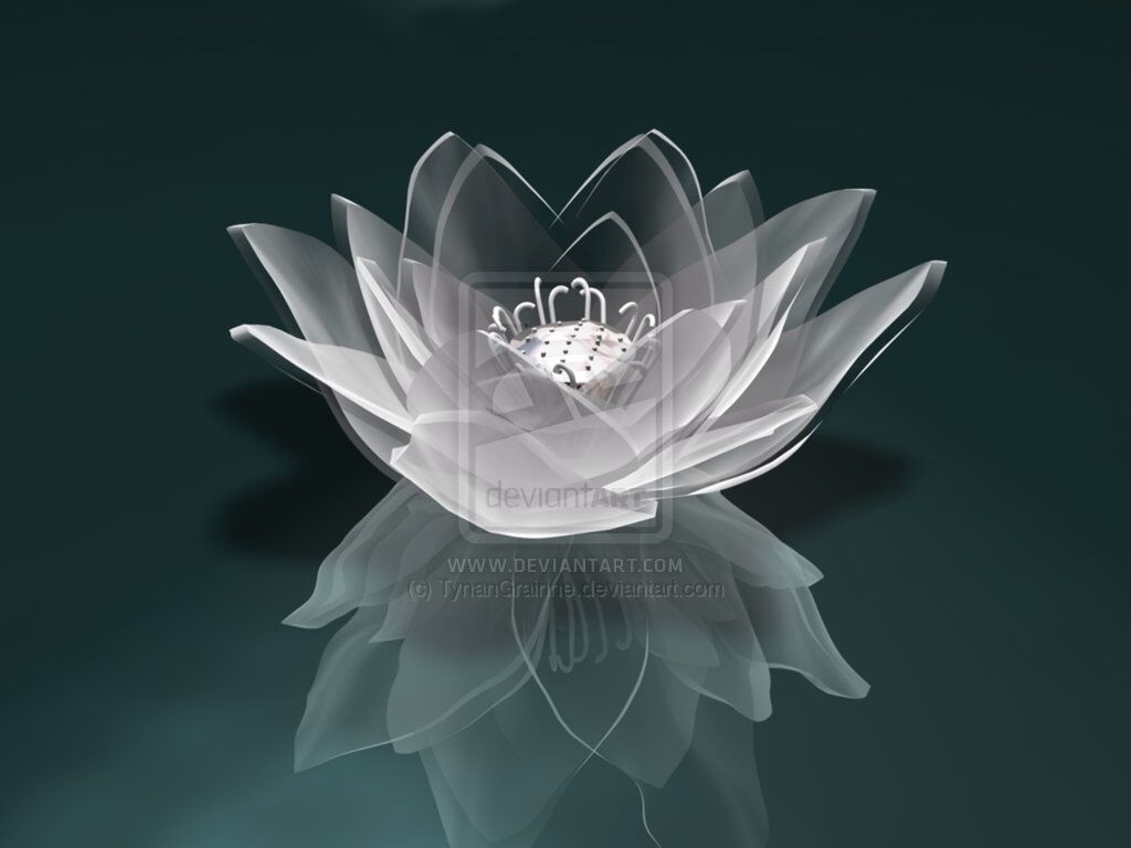Black and white lotus flower photo lotus flowers pinterest lotus black and white lotus flower photo izmirmasajfo Image collections