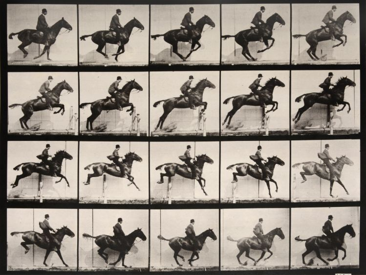 ANIMAL LOCOMOTION PLATE 640 MAN RIDING JUMPING HORSE 1887 EADWEARD MUYBRIDGE 1830 1904