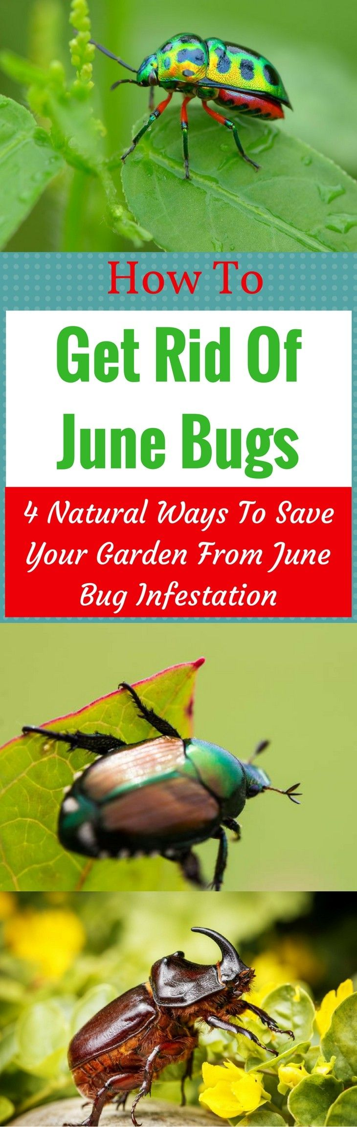 How to get rid of june bugs 4 natural ways to save your