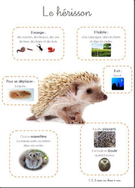 Le h risson fiche p dagogique animaux pinterest le h risson animal et fiches - Animal qui mange les fourmis ...