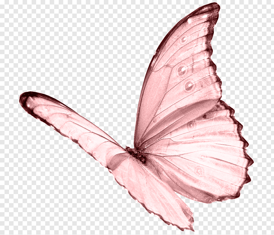 Pink Transparent Bubble Butterfly Effect Element Png And Psd Butterfly Effect Doodle Frames Floral Logo Design