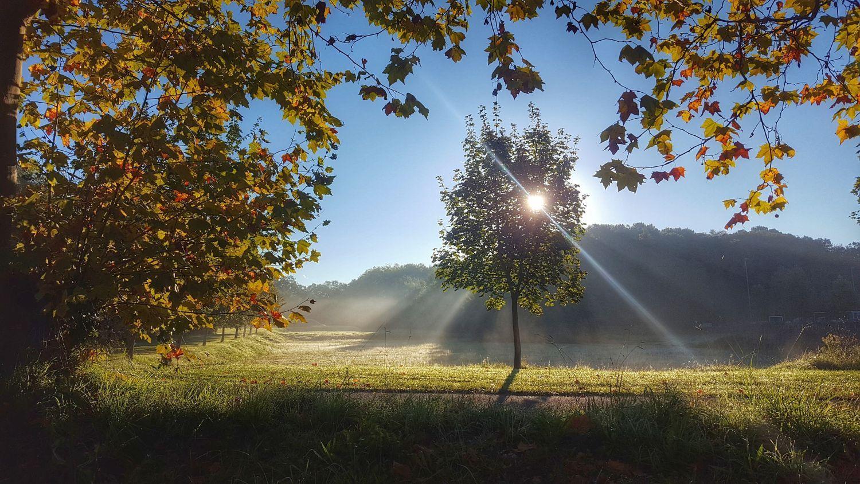 Untitled By Francois Journot On 500px Landscape Nature Sun Light Tree Season Grass Landscape Wallpaper S Nature Beautiful landscape tree plants sun rays