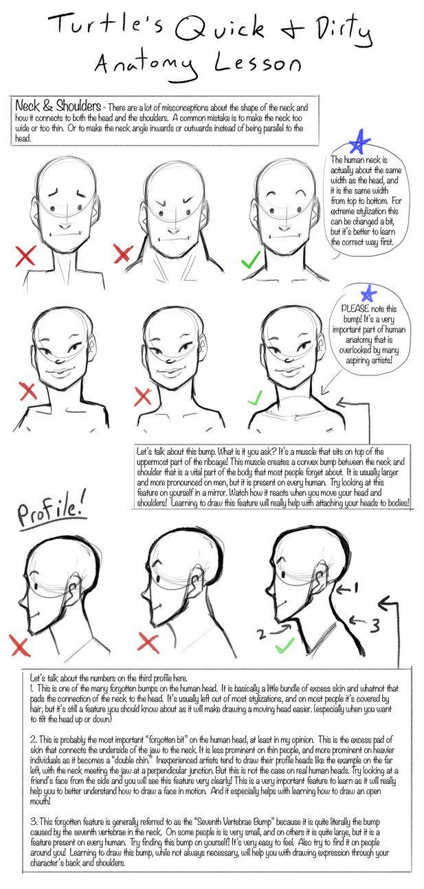 Q + D Anatomía Lessons- cuello y los hombros por la tortuga-Artes ...