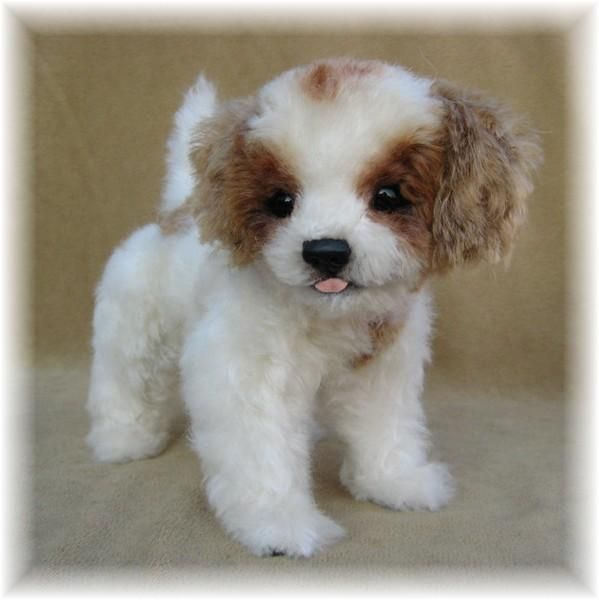 Past Work With Images Cute Little Animals King Charles Cavalier Spaniel Puppy Cute Animals