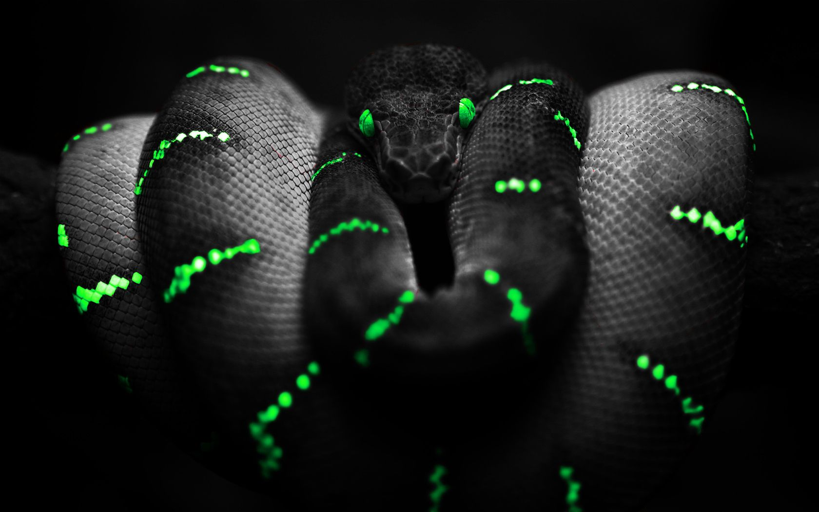 Snake Nature Black Green Snake Wallpaper Black Wallpaper Iphone Colorful Wallpaper Animal Wallpaper