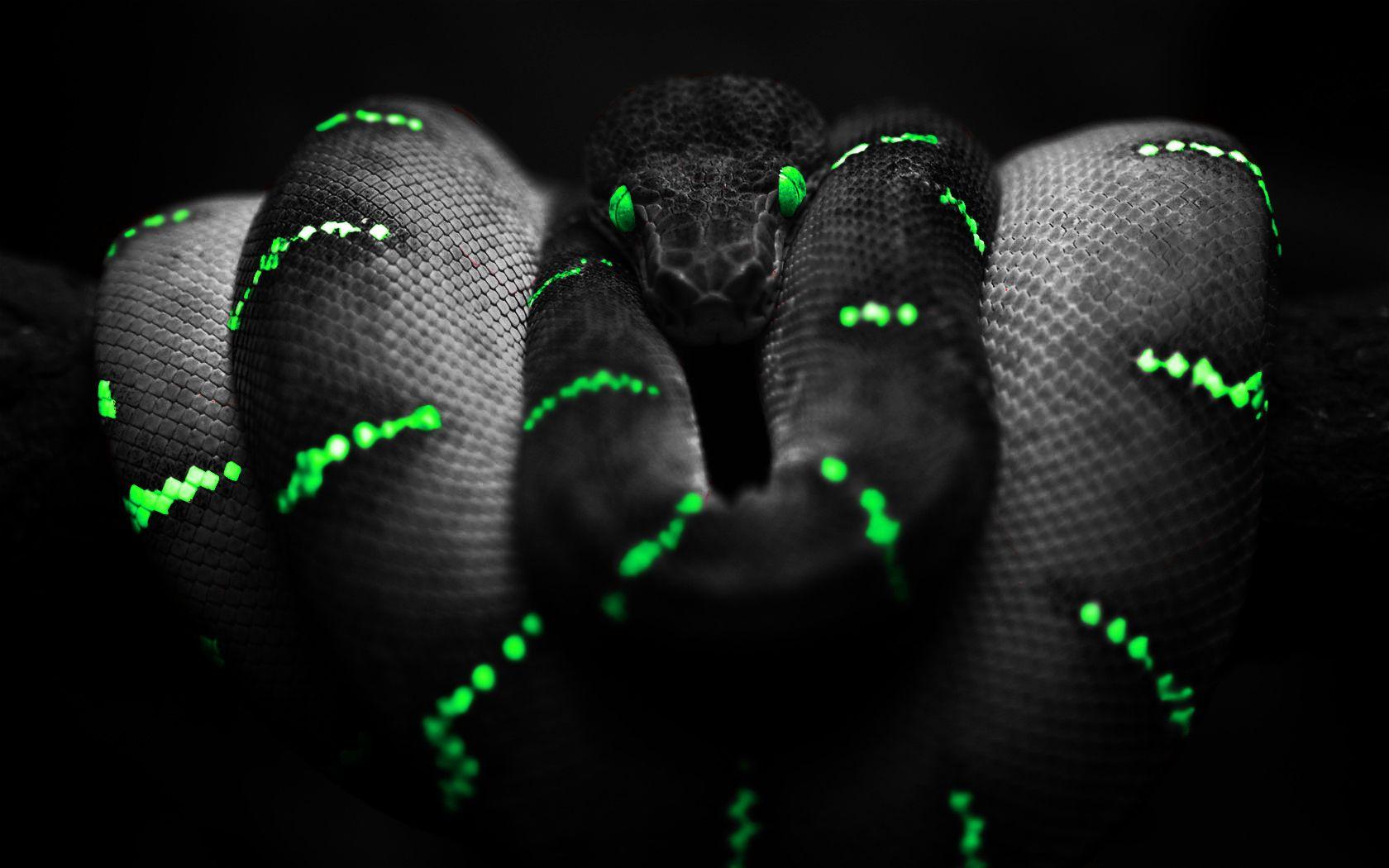 snake nature black green (With images) Snake wallpaper