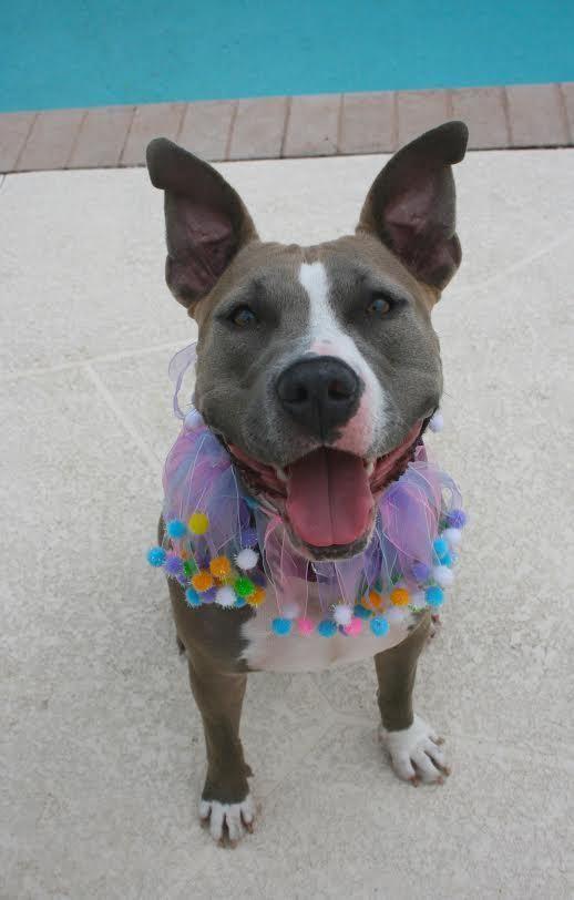 Adopt Kari On Adoption Terrier Mix Dogs Fleas