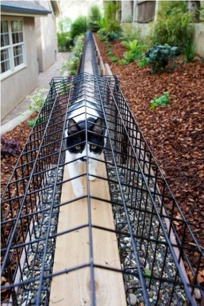 A Top Fence For Outdoor Access Cat Room Ideas Decorating Www Artycatz Tumblr