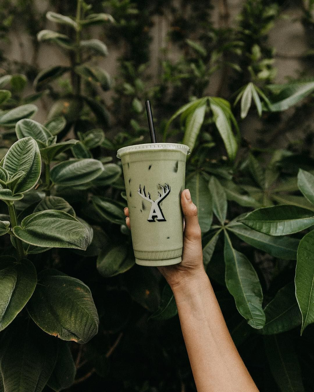 A Little Matcha And Vibe Re Up In K Town Didyoukno Alfred Coffee Alfred Tea Matcha