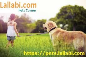 Choose Your Favorite Pet Online From Large Collection Of Pets India Bangalore Kerala Chennai Hyderabad Dogs Dogs And Kids Dogs Golden Retriever Dogs