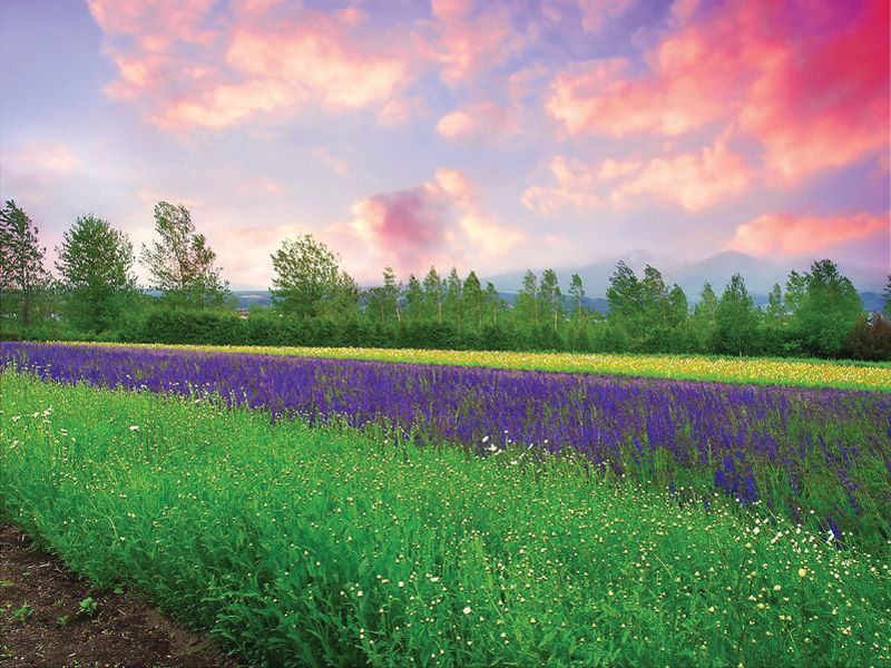 Province Lavender Wax Melts