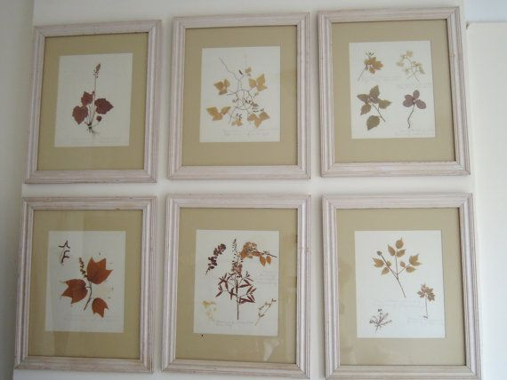 Antique 1882 Herbarium Pressed Flowers Specimen Framed