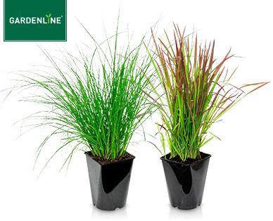 Gardenline Winterhartes Ziergras Ziergras Pflanzen Winterhart